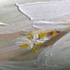 schilderij detail tulp